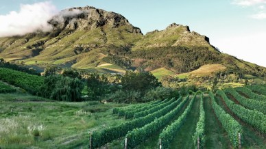 Stellenbosch_vineyards